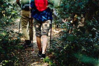 vandretur i skoven
